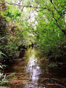 Início da trilha molhada // Début du sentier.